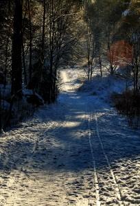 Skiløype-desember-2010